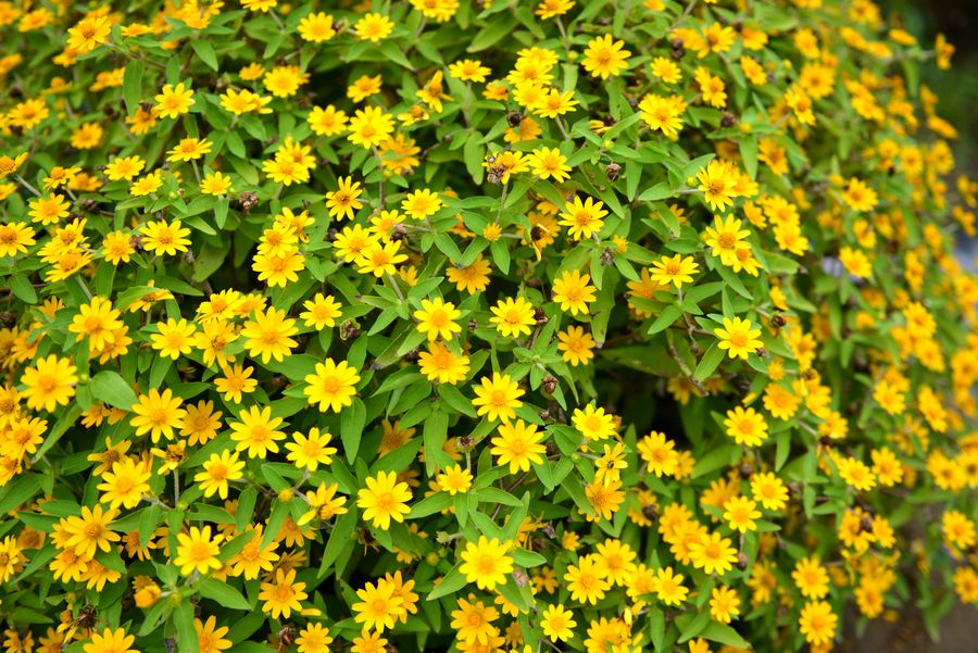 秋の小さな花たち-3
