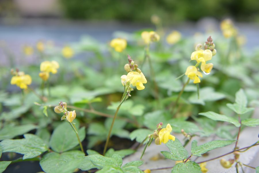 秋の小さな花たち-4