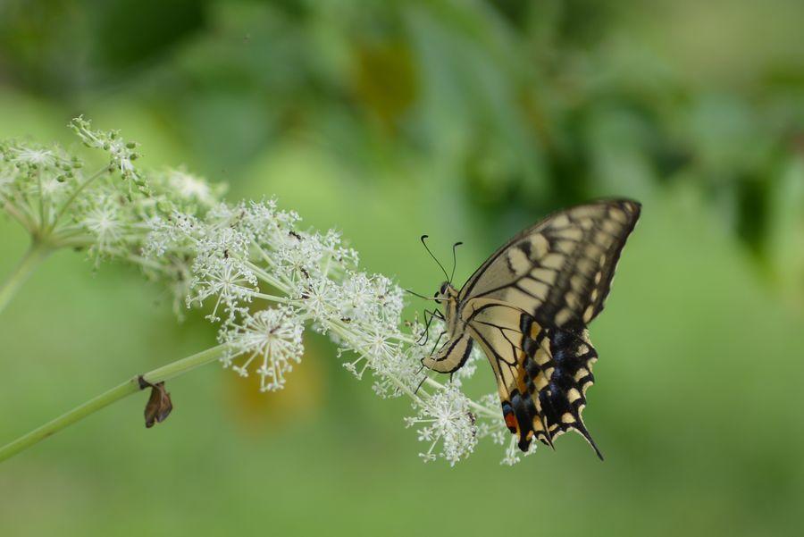 花に蝶-2