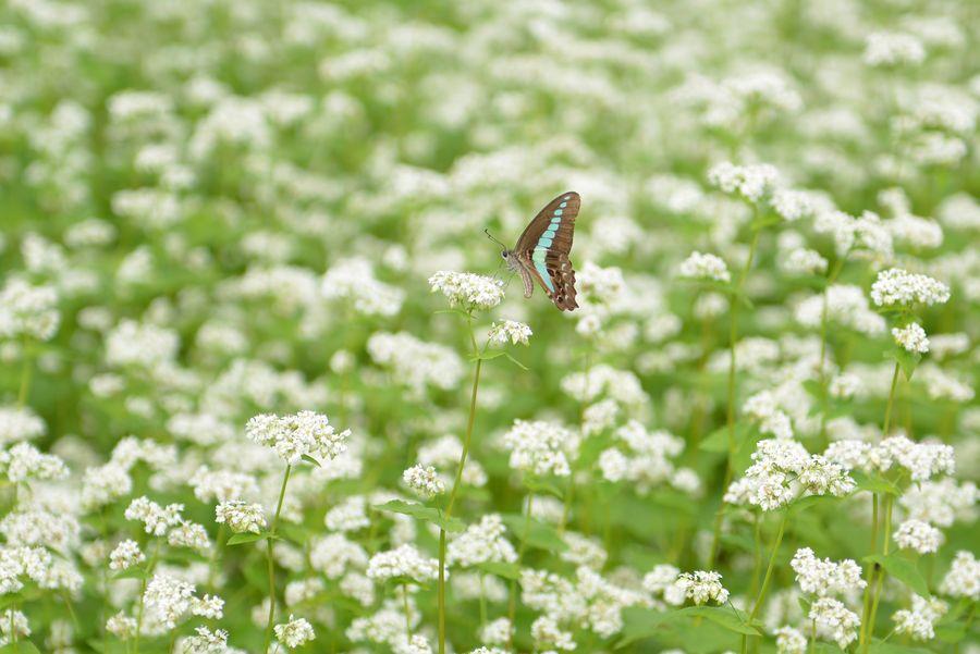 花に蝶-4