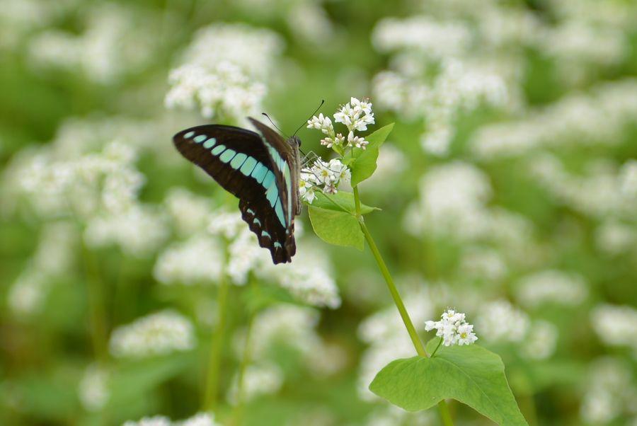 花に蝶-5