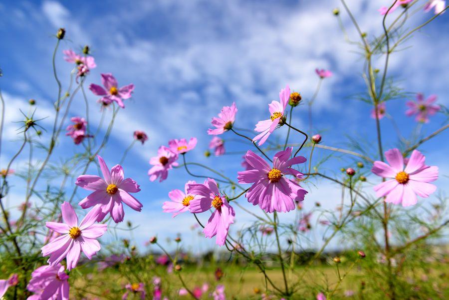 花に虫-1