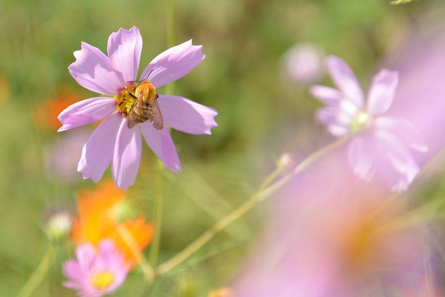 花に虫-2