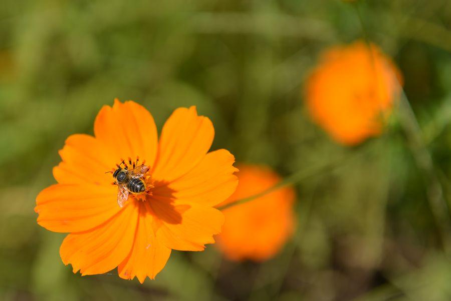 花に虫-3