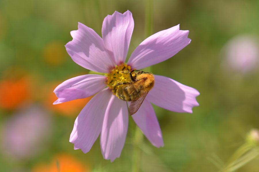 花に虫-4