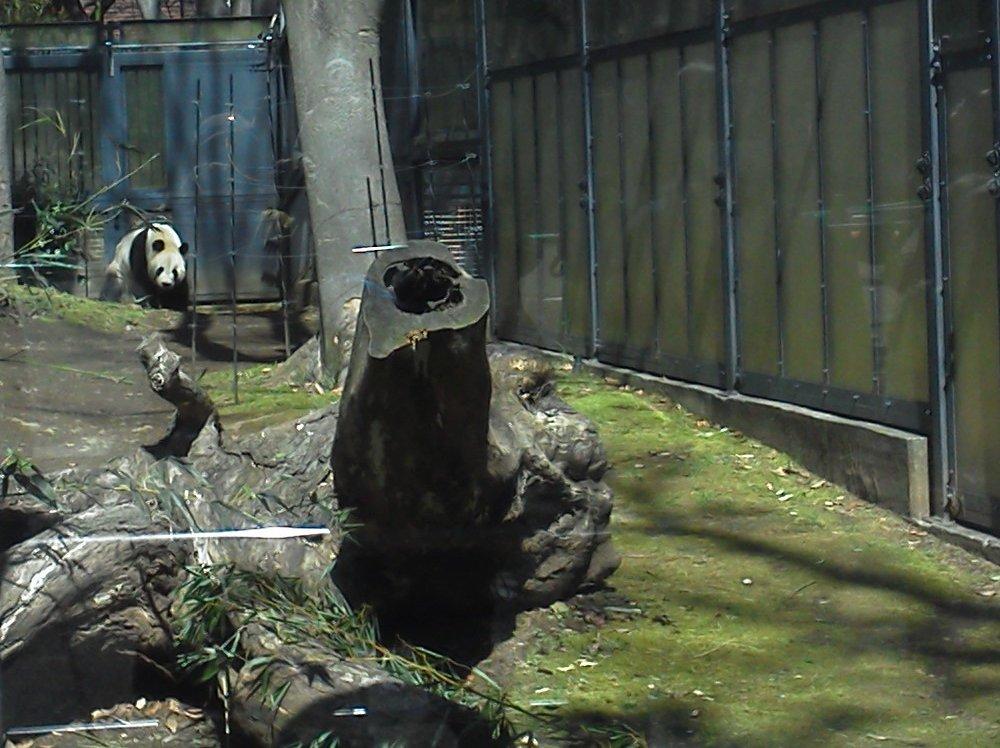 F1000518上野動物園