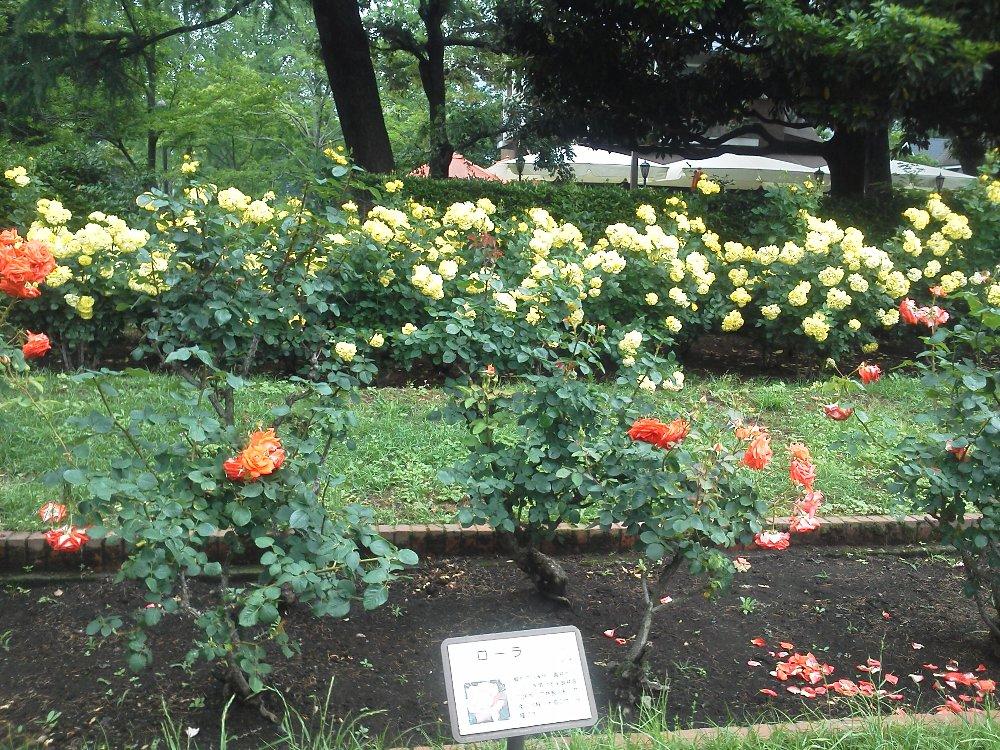 F1001026日比谷公園第一花壇