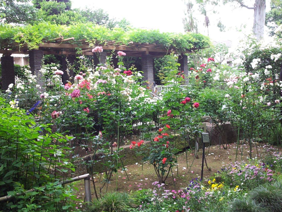 160526赤塚植物園バラコーナー