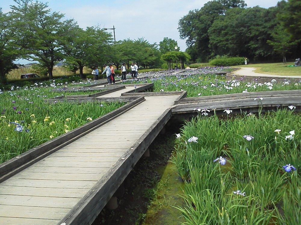 F1000042山崎公園せせらぎ菖蒲園