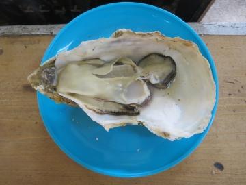 かなり大きいのですが粒より殻の大きさ際立って…