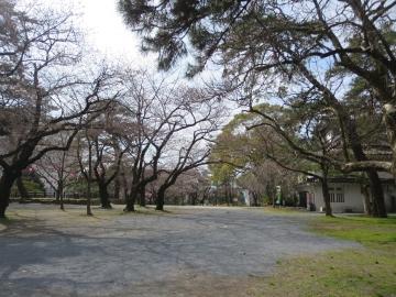小倉城の桜が開花した頃でした