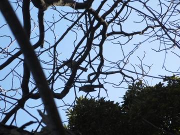 野鳥も集まる公園でした
