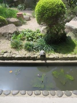庭園には多くの亀が