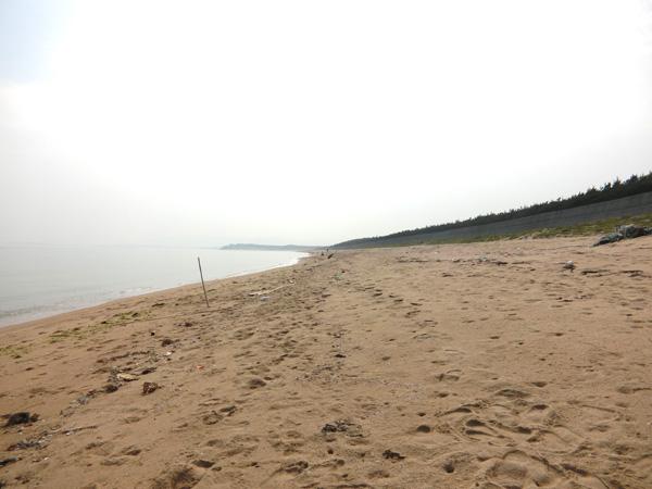 20160612ビーチコーミング03
