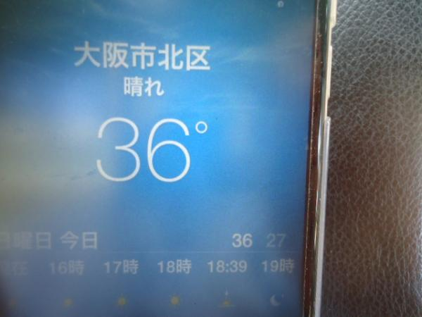 8/21 サイゼリヤ・ドリア%青豆君