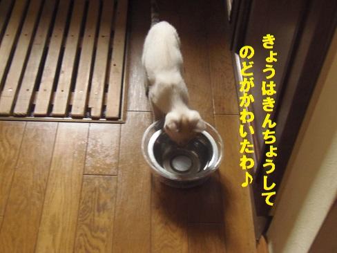 あきちゃん2