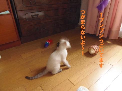 あきちゃん3日目2