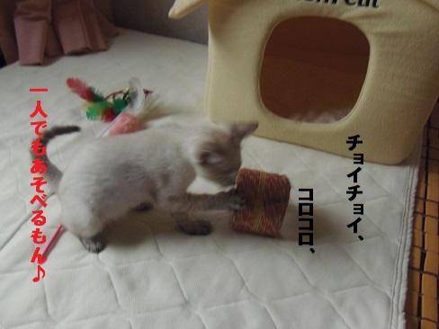 あきちゃん3日目4