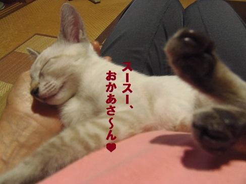 お休み、あきちゃん