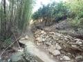 イノシシによる石垣の崩壊1