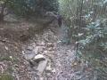 イノシシによる石垣の崩壊2