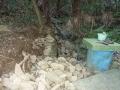 イノシシによる石垣の崩壊4