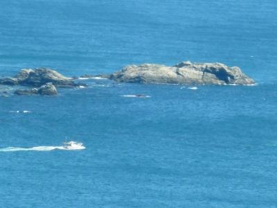 佐田岬半島の漁船出漁5