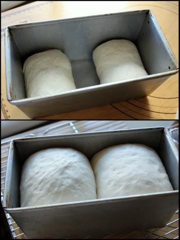 16.08.25乃が美の食パン3