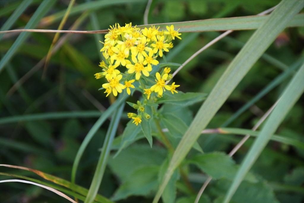 お花が綺麗_3