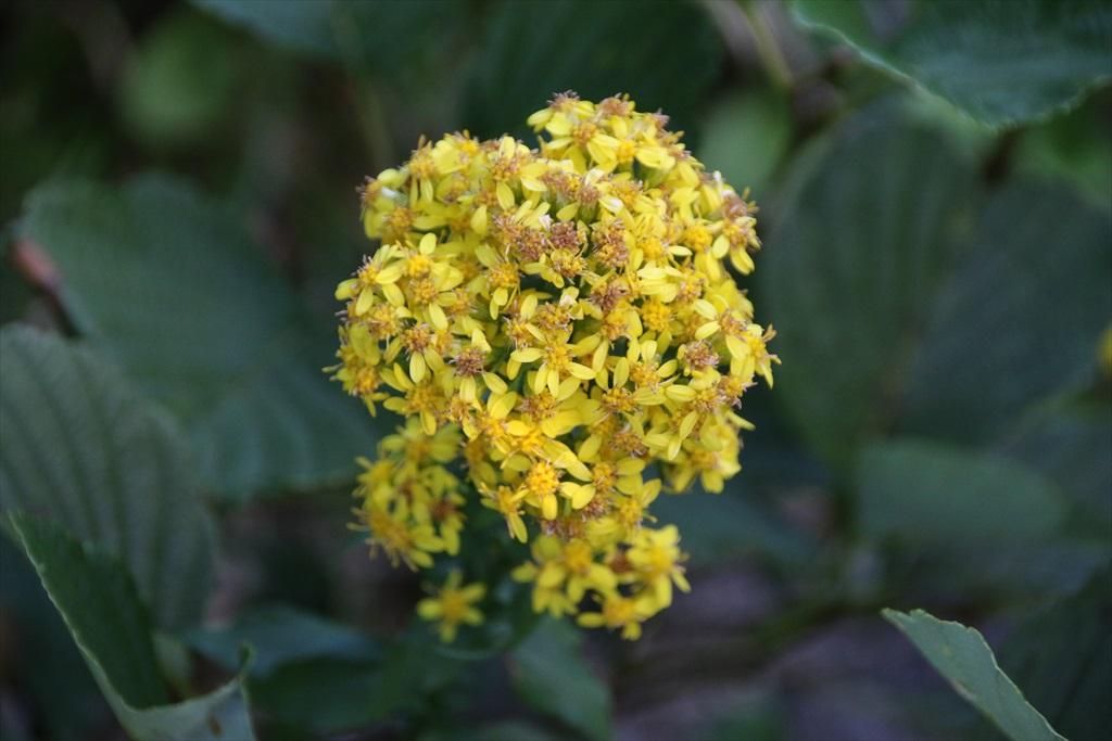 お花が綺麗_5