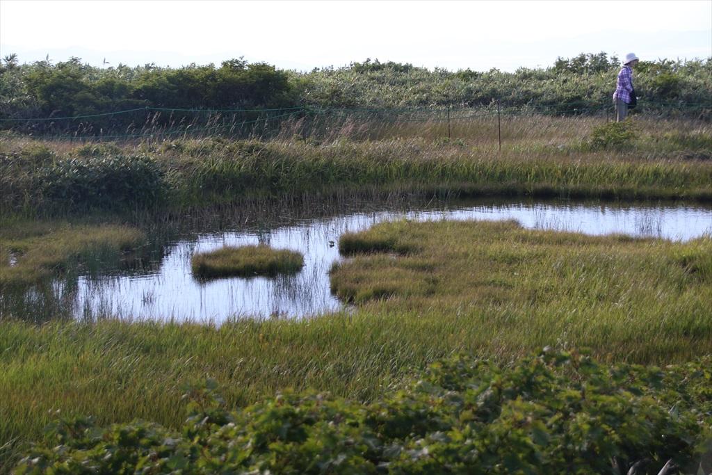 ここからは池塘がたくさんあった_7