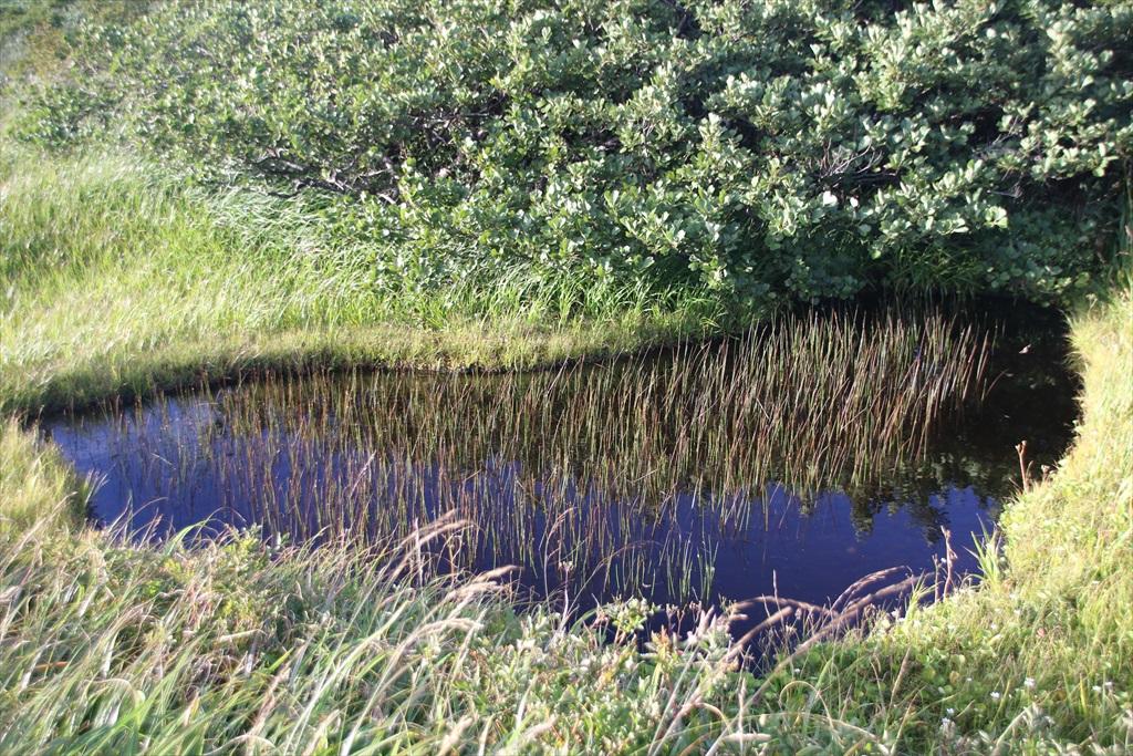 まだまだ池塘がある_1