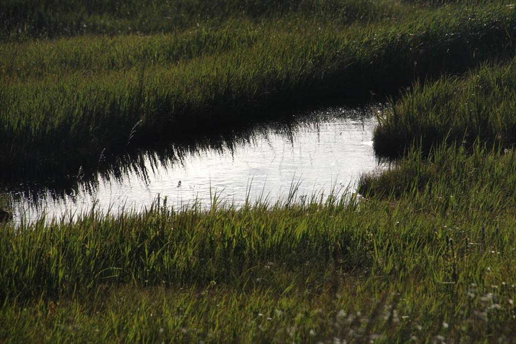 まだまだ池塘がある_8