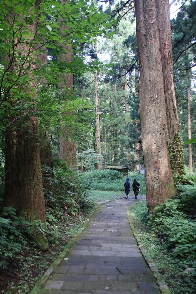 一の坂から爺杉方面へ戻る道_1