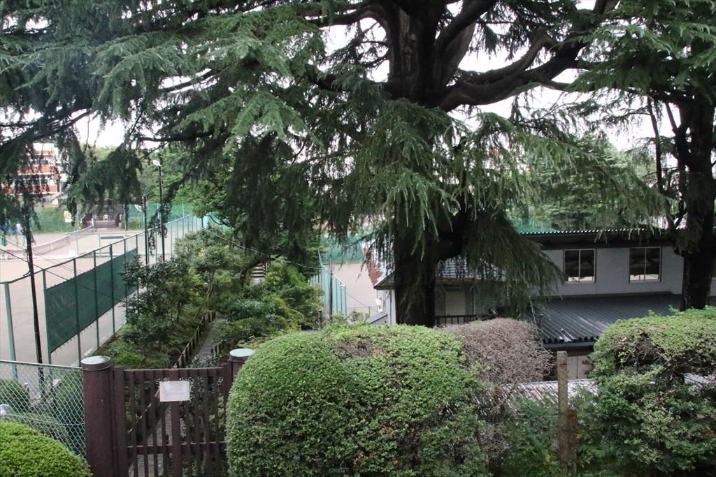 横浜インターナショナル・テニス・コミュニティー(YITC)_2