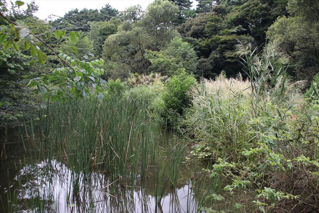 小さな沼及びその周辺は繁茂が盛りを迎えていた_1