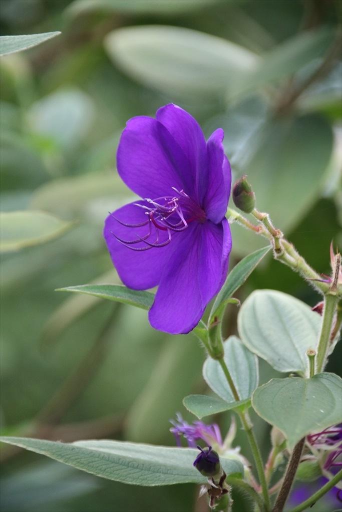 円覚寺境内の花さんたち_3