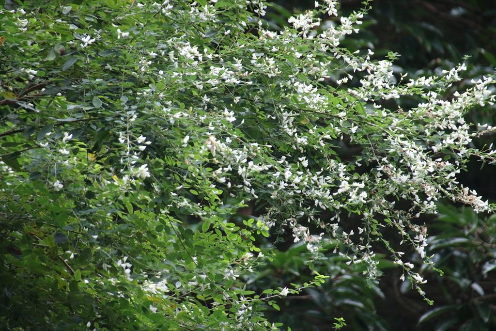 円覚寺境内の花さんたち_5