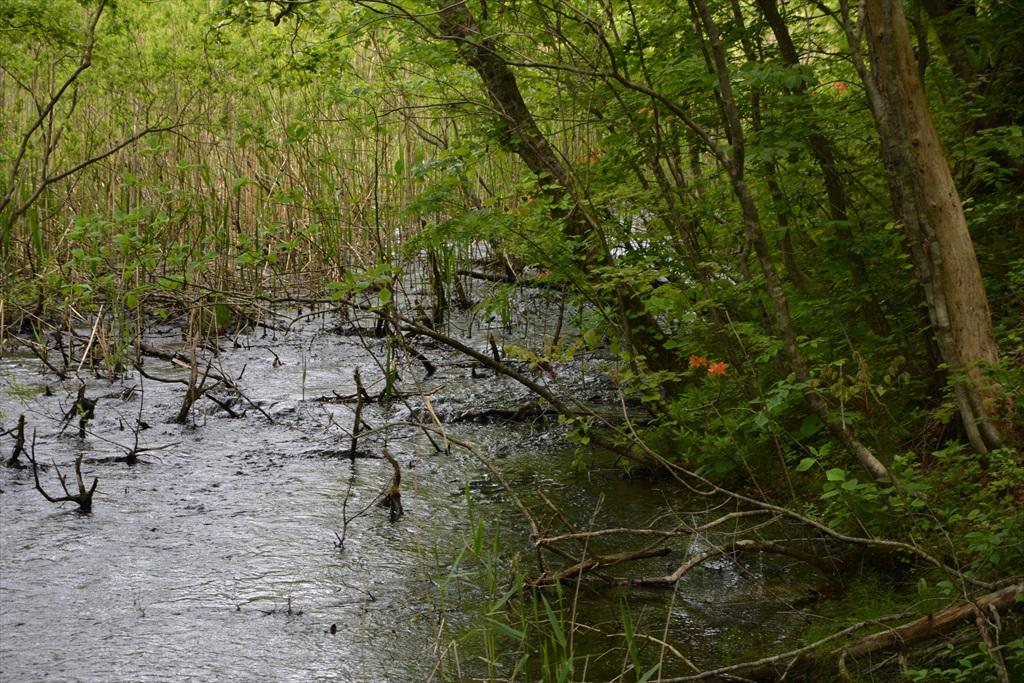 沼の終わり