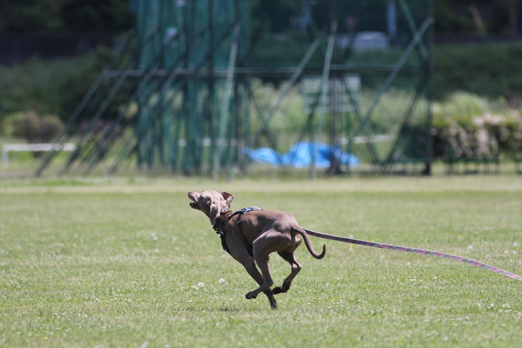俊足の猟犬_5