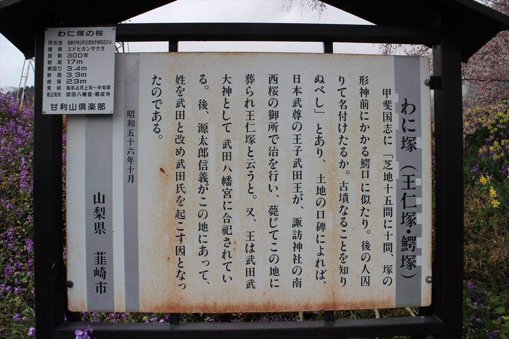 わに塚の桜_2