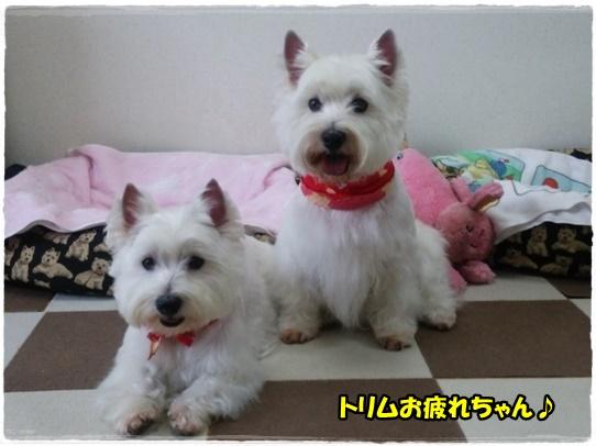 azukiai1_201608302027090f8.jpg
