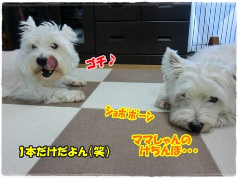 azukiai3_201607252038253f4.jpg