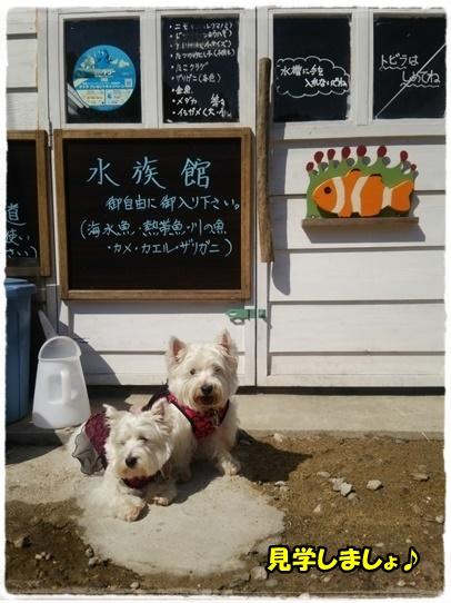 cafe14_20161010202234089.jpg