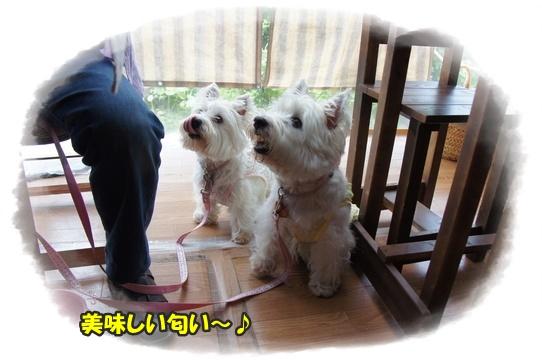 cafe5_20160721170208e67.jpg