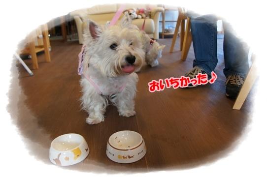cafe8_20160426001859c53.jpg