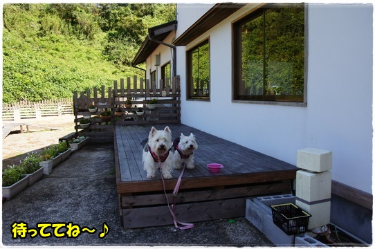 cafe9_20161010192637221.jpg