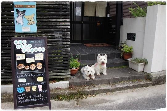 cafe_20160721164601992.jpg