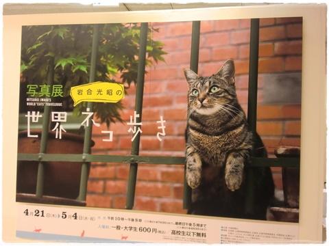 cat_2016050123160276e.jpg