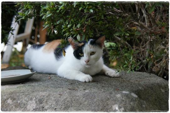 cat_20160906232929278.jpg